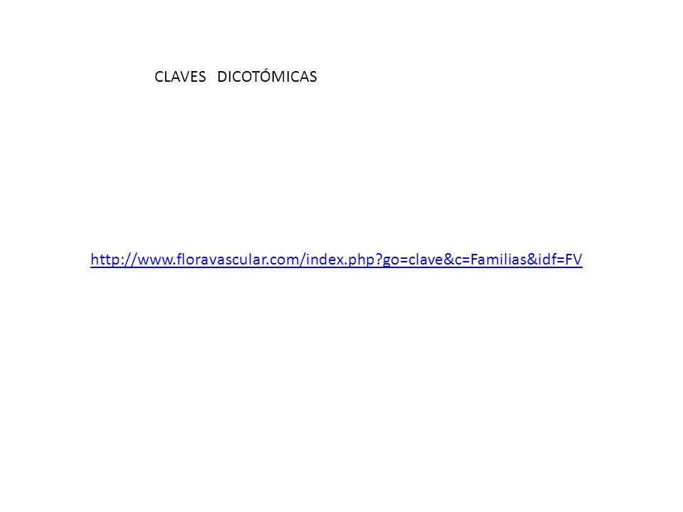CLAVES DICOTÓMICAS http://www.floravascular.com/index.php go=clave&c=Familias&idf=FV