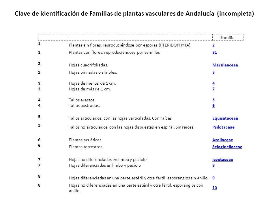 Clave de identificación de Familias de plantas vasculares de Andalucía (incompleta)