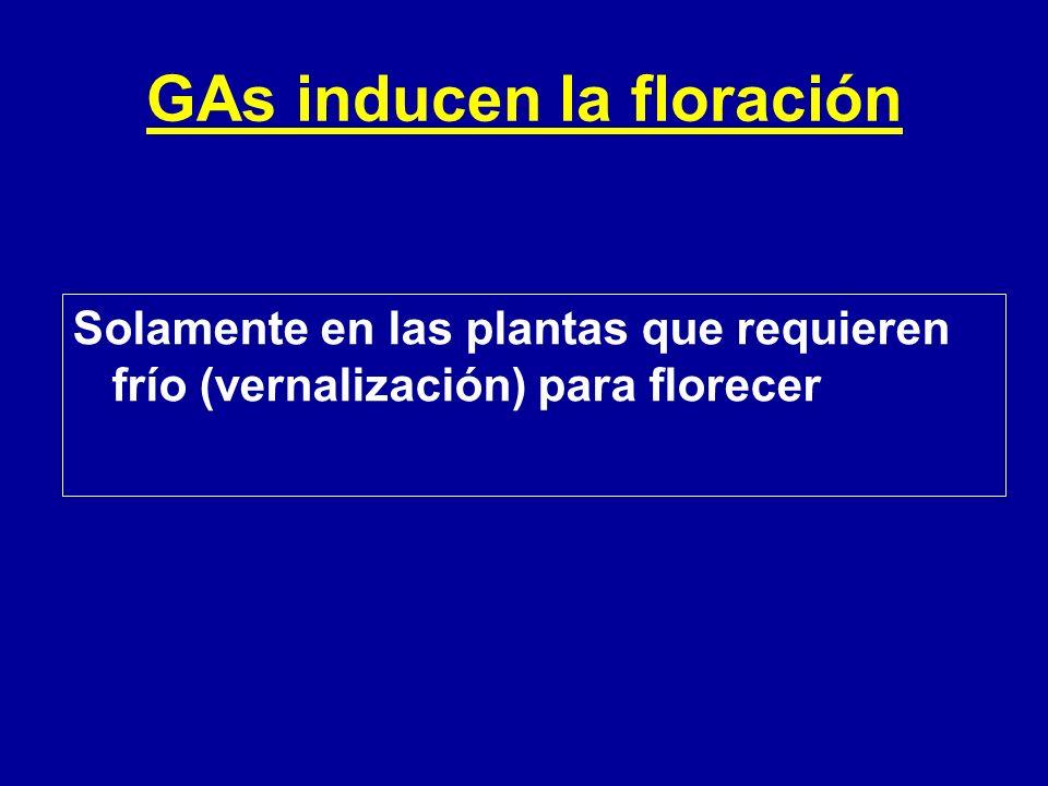 GAs inducen la floración