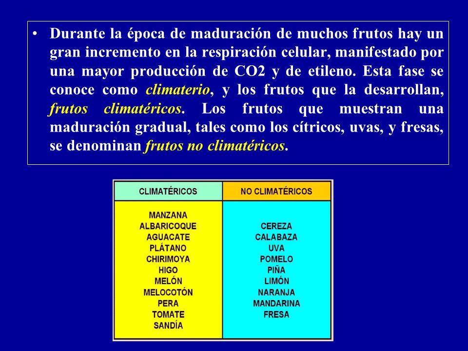 Durante la época de maduración de muchos frutos hay un gran incremento en la respiración celular, manifestado por una mayor producción de CO2 y de etileno.