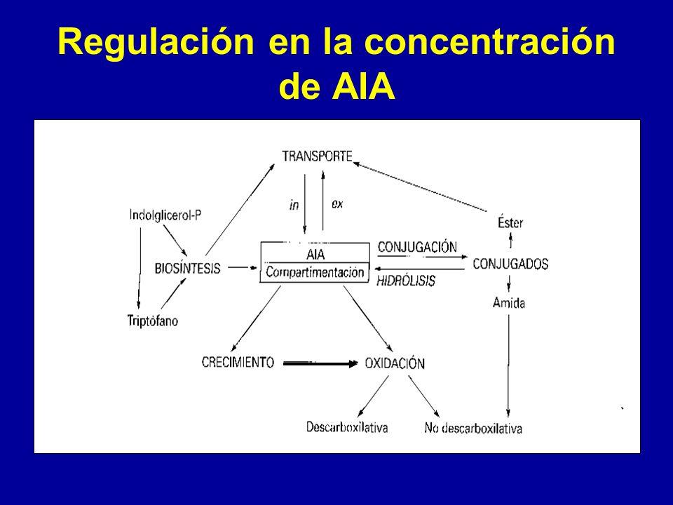 Regulación en la concentración de AIA