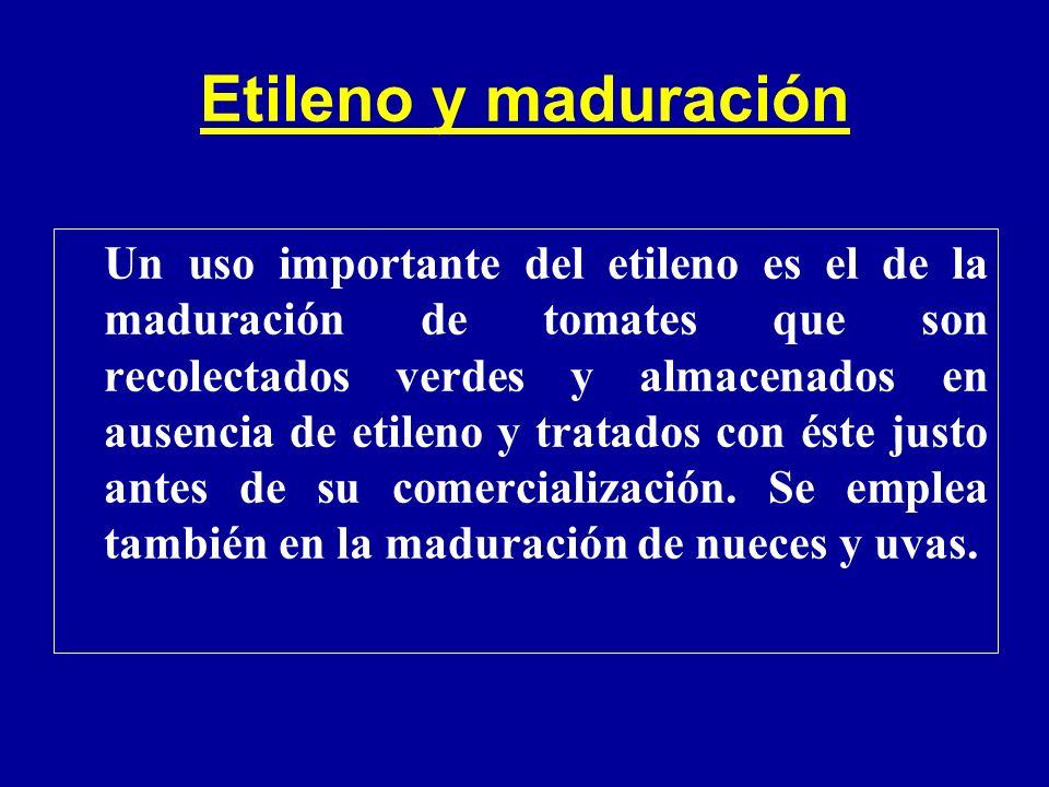 Etileno y maduración