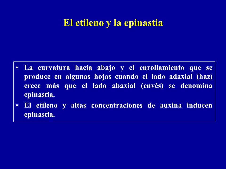 El etileno y la epinastia