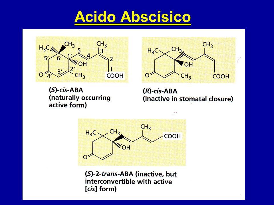 Acido Abscísico