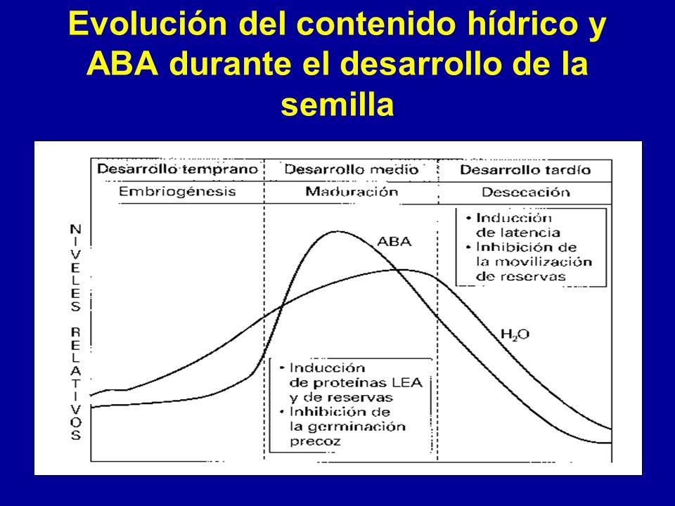 Evolución del contenido hídrico y ABA durante el desarrollo de la semilla