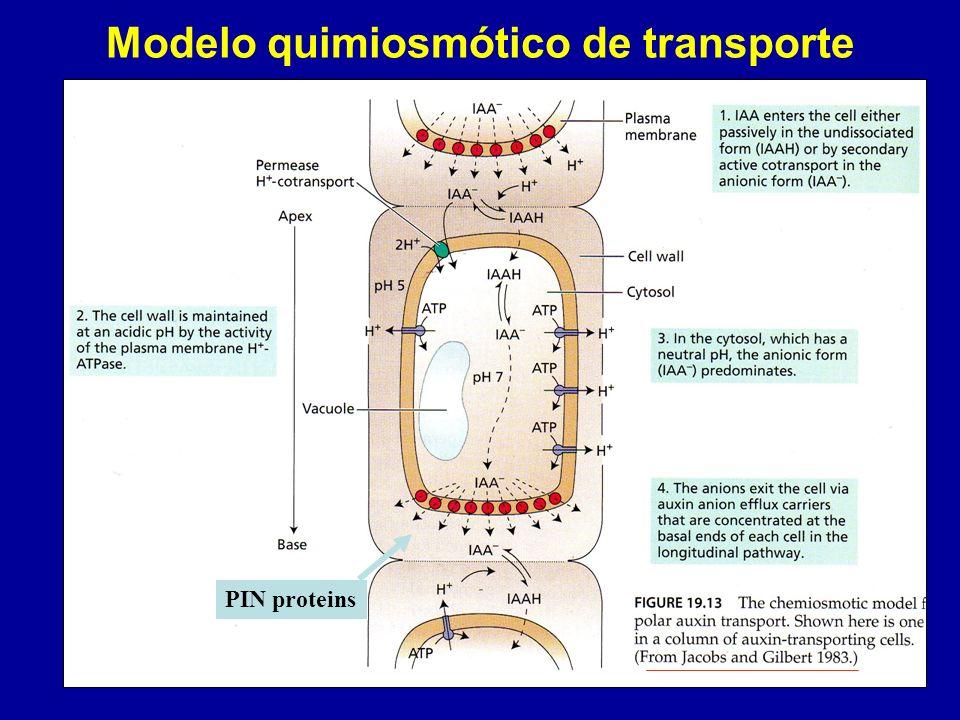Modelo quimiosmótico de transporte