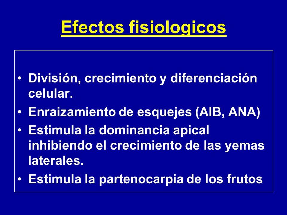 Efectos fisiologicos División, crecimiento y diferenciación celular.