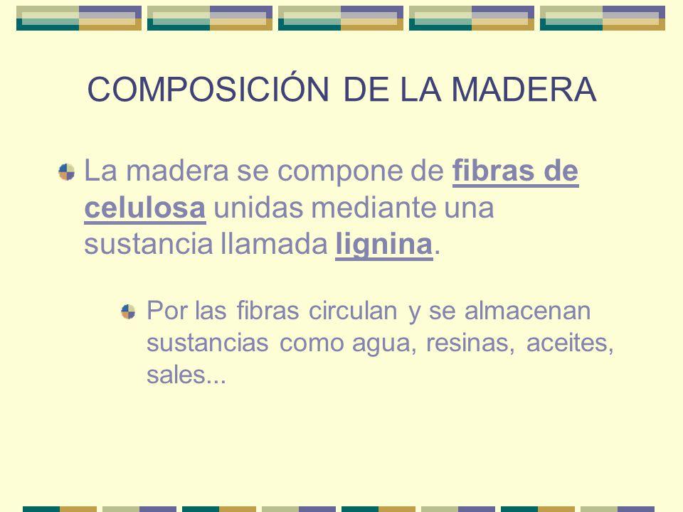 COMPOSICIÓN DE LA MADERA
