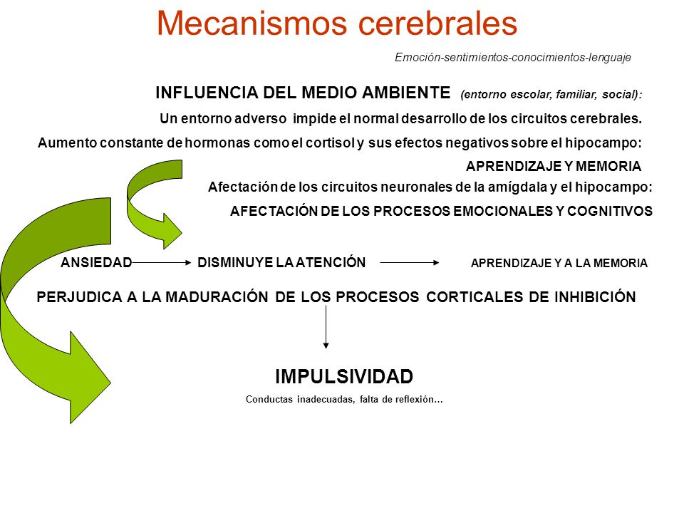 Mecanismos cerebrales