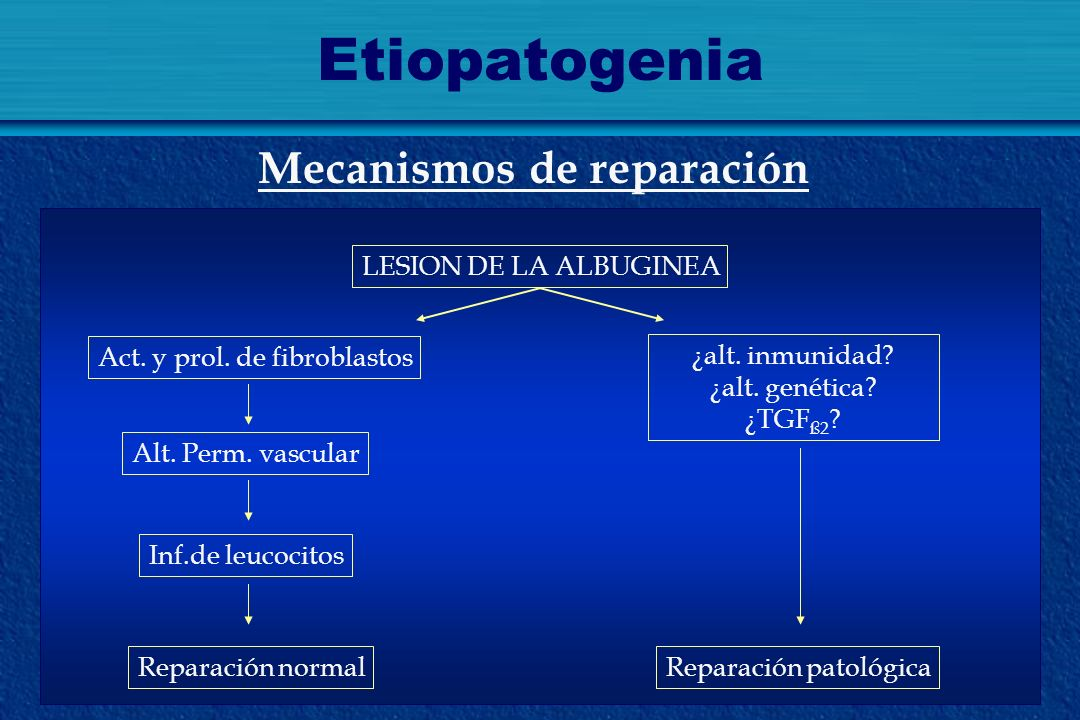 Etiopatogenia Mecanismos de reparación LESION DE LA ALBUGINEA