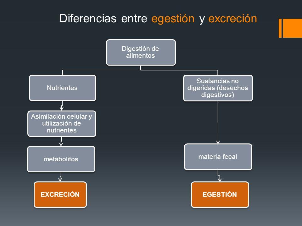 Diferencias entre egestión y excreción