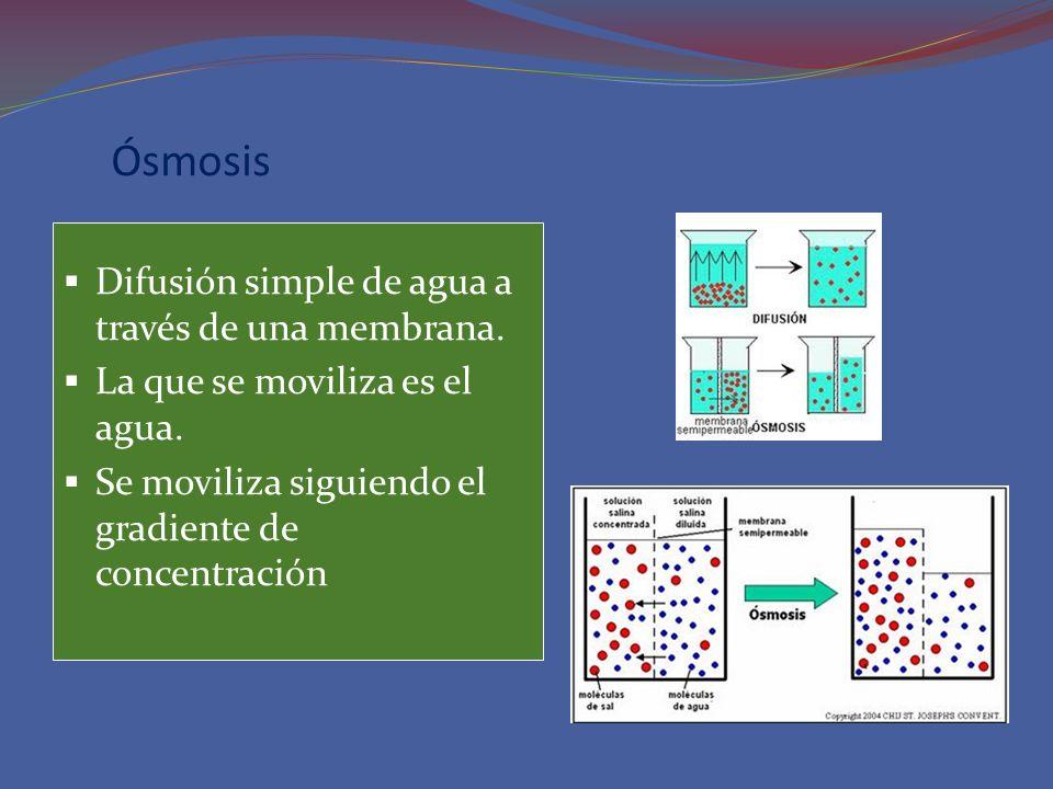 Ósmosis Difusión simple de agua a través de una membrana.