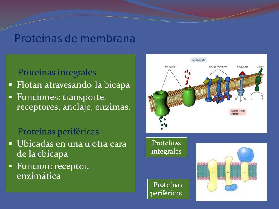 Proteínas de membrana Proteínas integrales