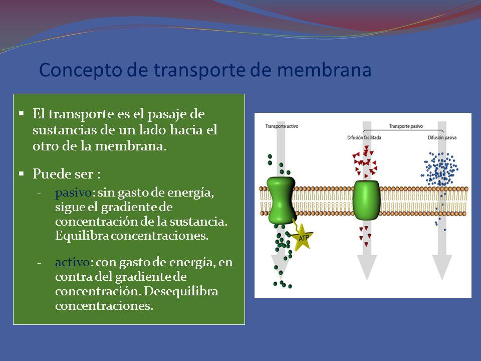 Concepto de transporte de membrana