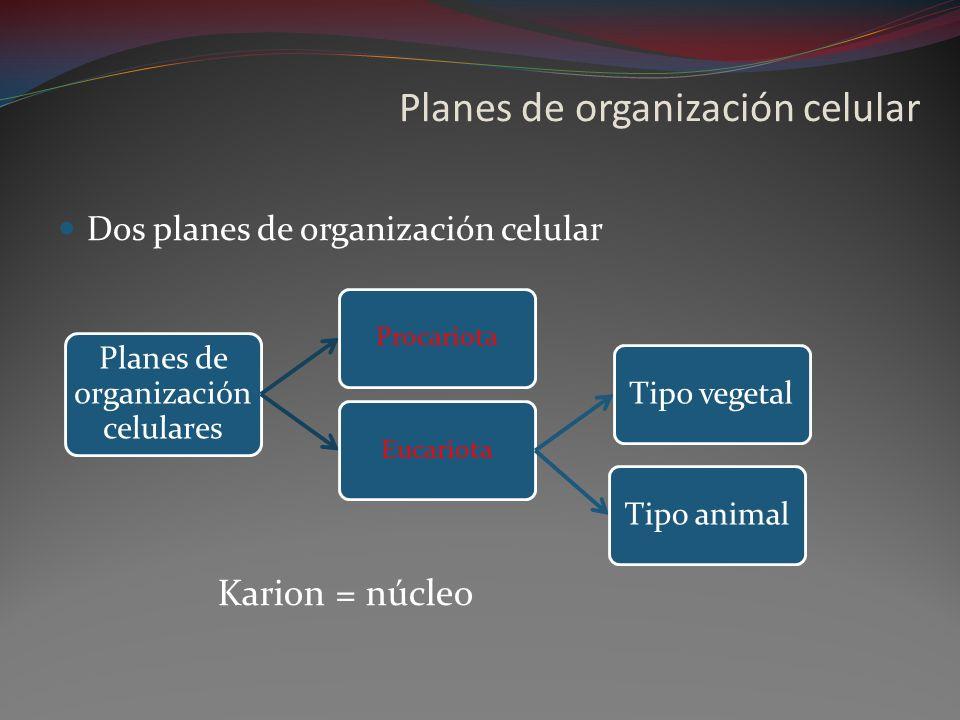 Planes de organización celular