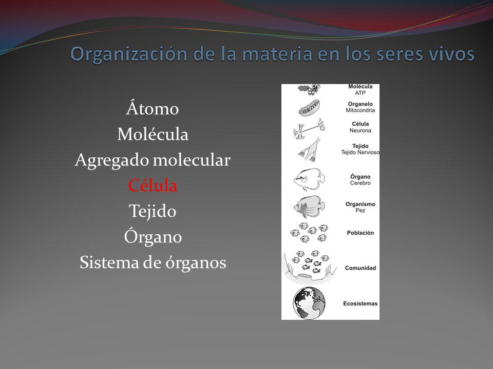 Organización de la materia en los seres vivos