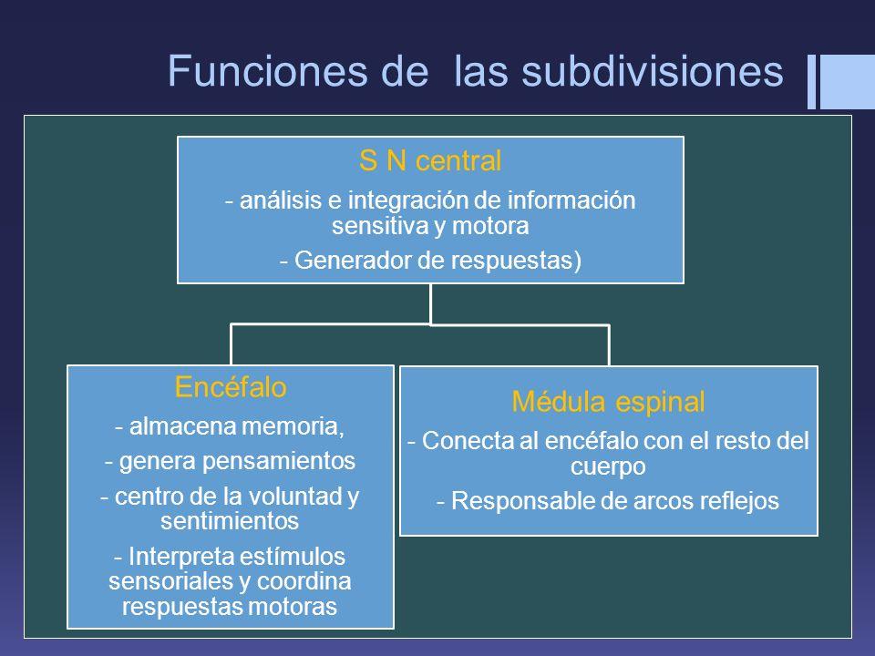 Funciones de las subdivisiones