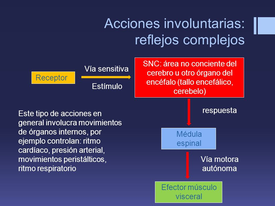 Acciones involuntarias: reflejos complejos