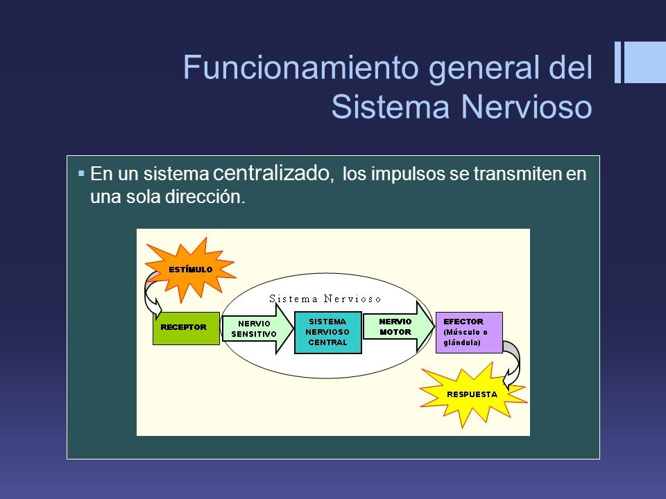 Funcionamiento general del Sistema Nervioso