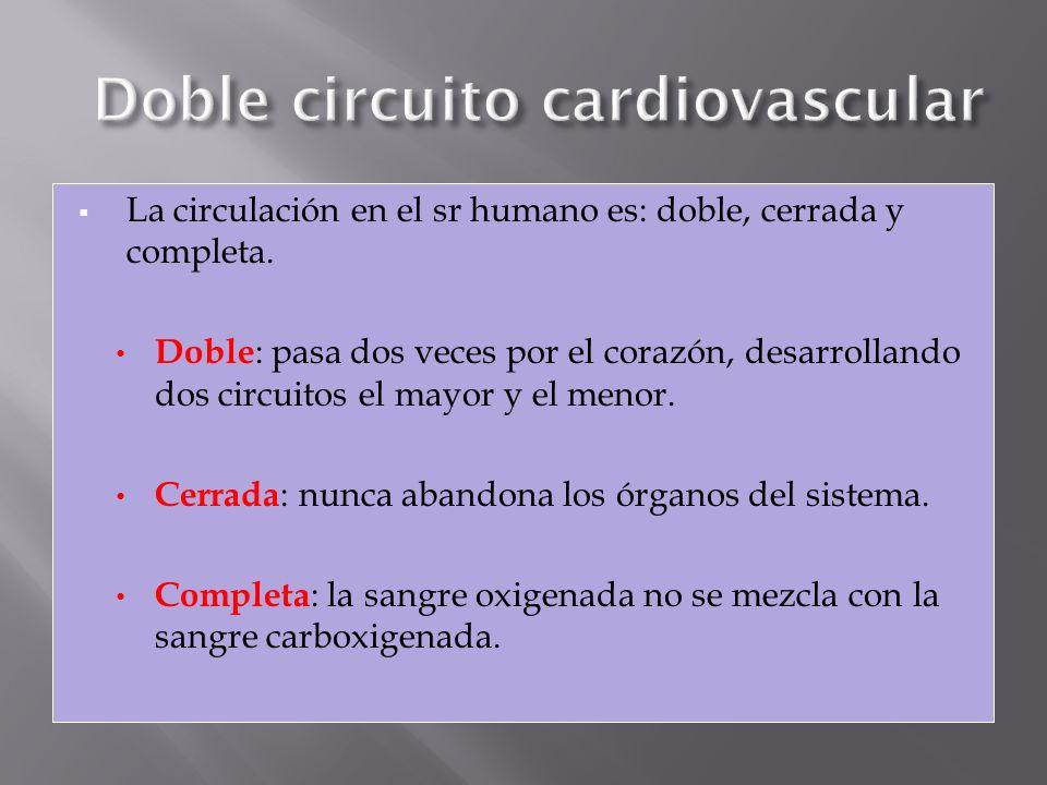 Doble circuito cardiovascular
