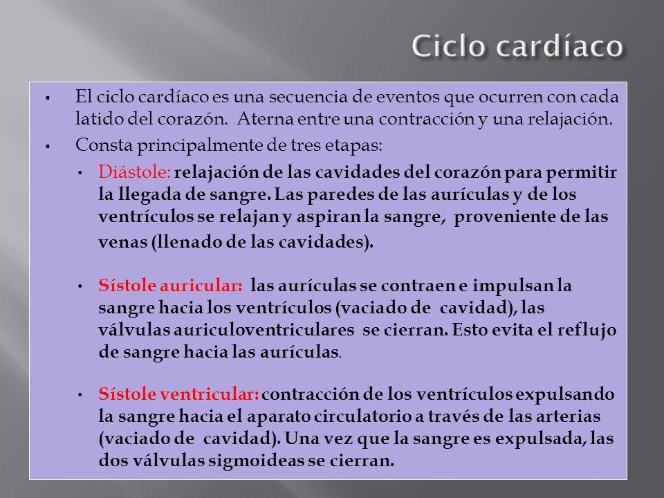 Ciclo cardíaco El ciclo cardíaco es una secuencia de eventos que ocurren con cada latido del corazón. Aterna entre una contracción y una relajación.