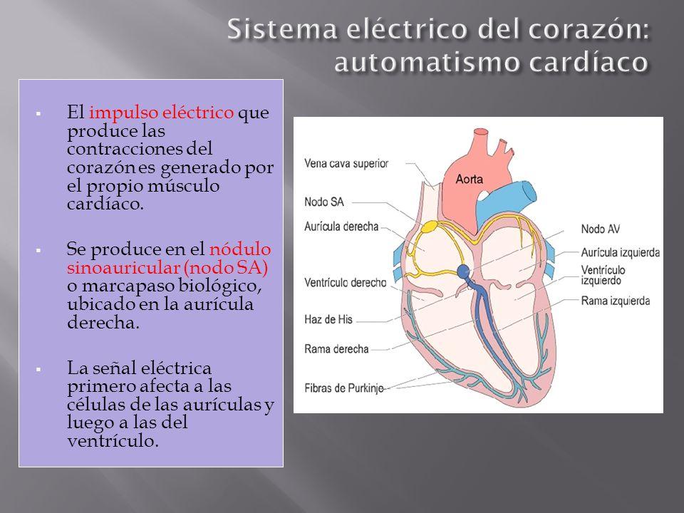 Sistema eléctrico del corazón: automatismo cardíaco