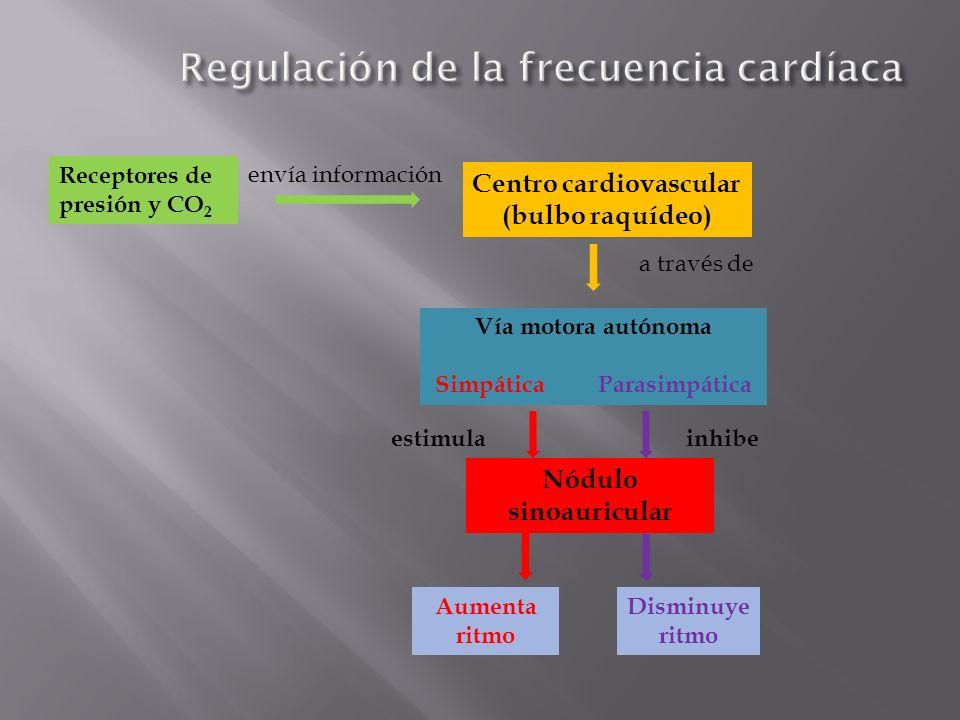 Regulación de la frecuencia cardíaca