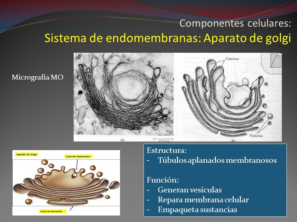 Componentes celulares: Sistema de endomembranas: Aparato de golgi