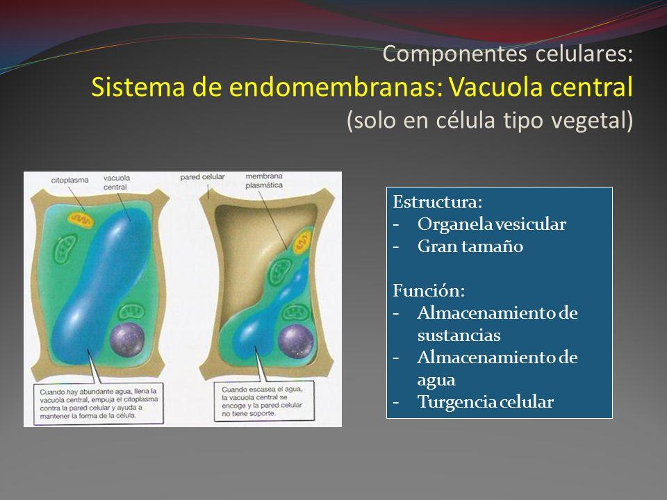 Componentes celulares: Sistema de endomembranas: Vacuola central (solo en célula tipo vegetal)
