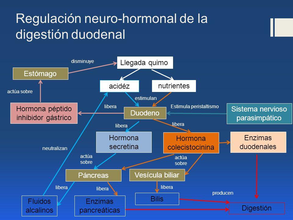 Regulación neuro-hormonal de la digestión duodenal