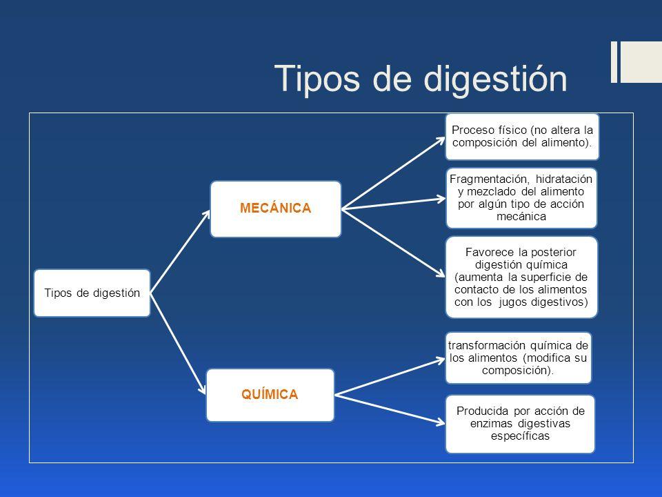 Tipos de digestión MECÁNICA QUÍMICA Tipos de digestión