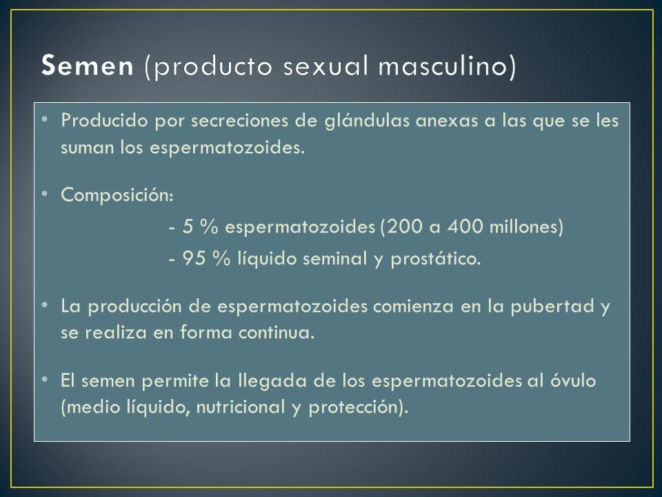 Semen (producto sexual masculino)
