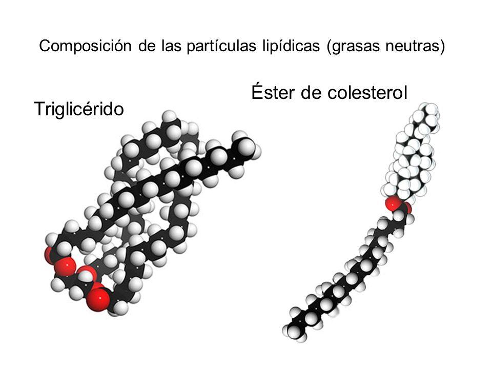 Composición de las partículas lipídicas (grasas neutras)