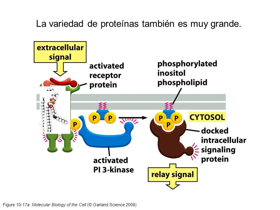 La variedad de proteínas también es muy grande.
