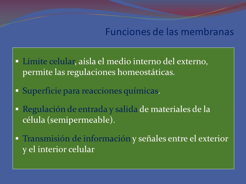 Funciones de las membranas