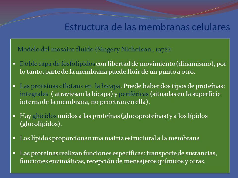 Estructura de las membranas celulares