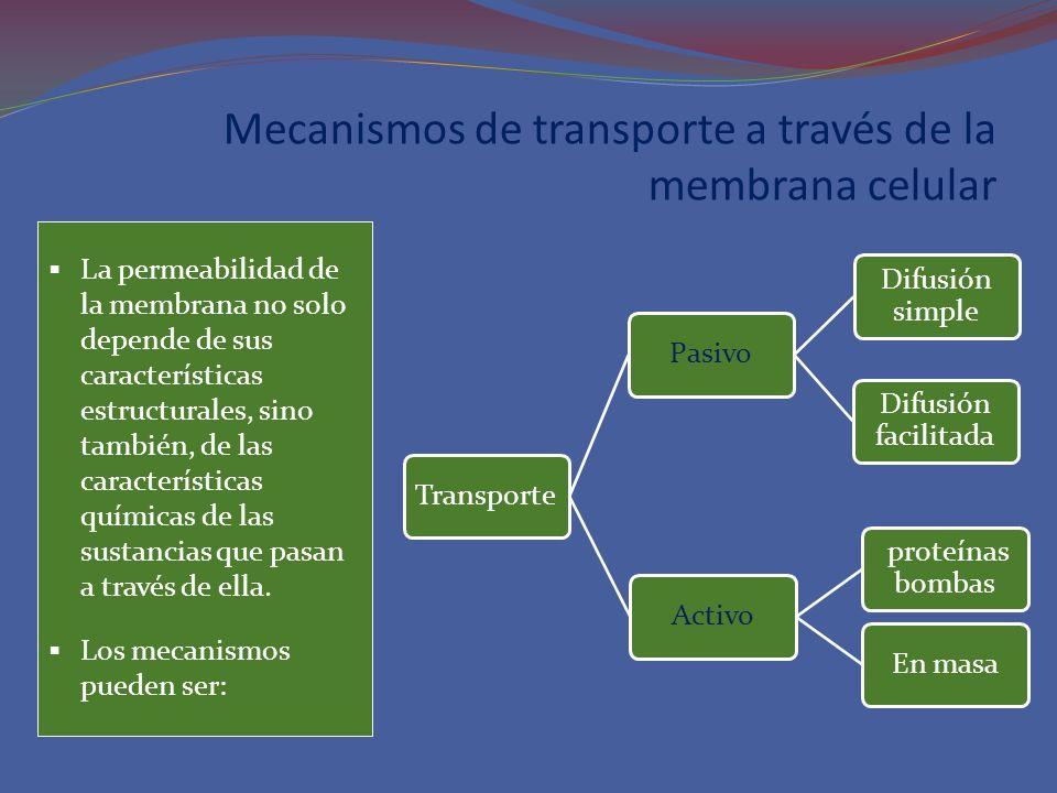 Mecanismos de transporte a través de la membrana celular