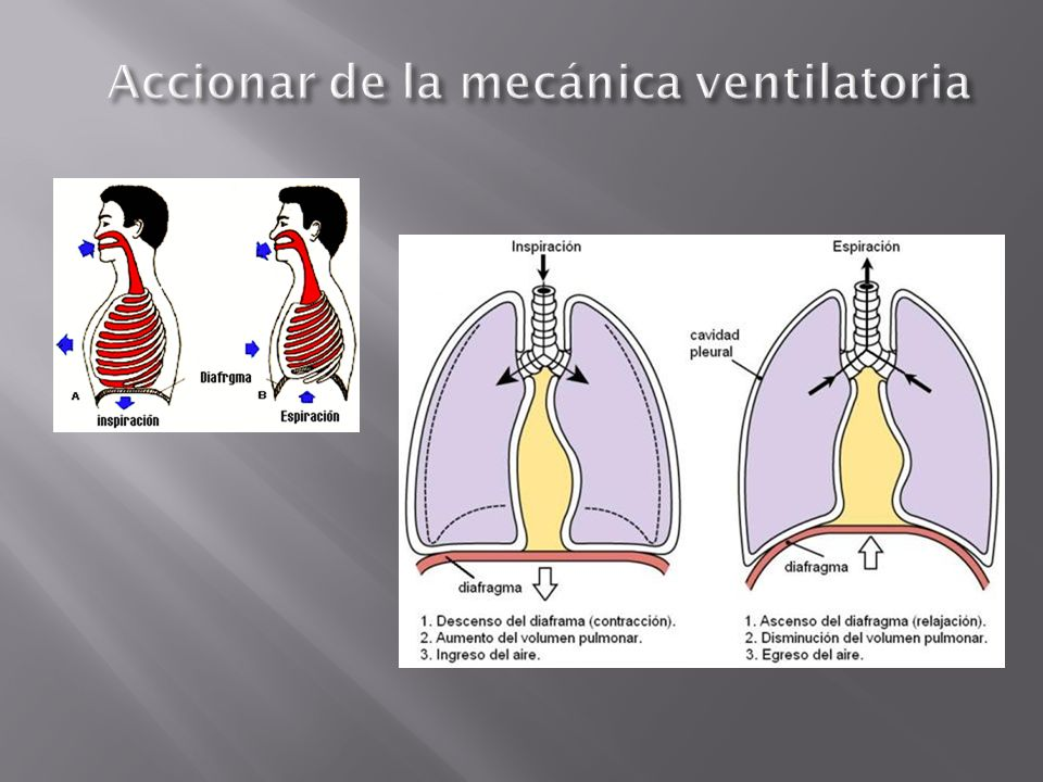 Accionar de la mecánica ventilatoria