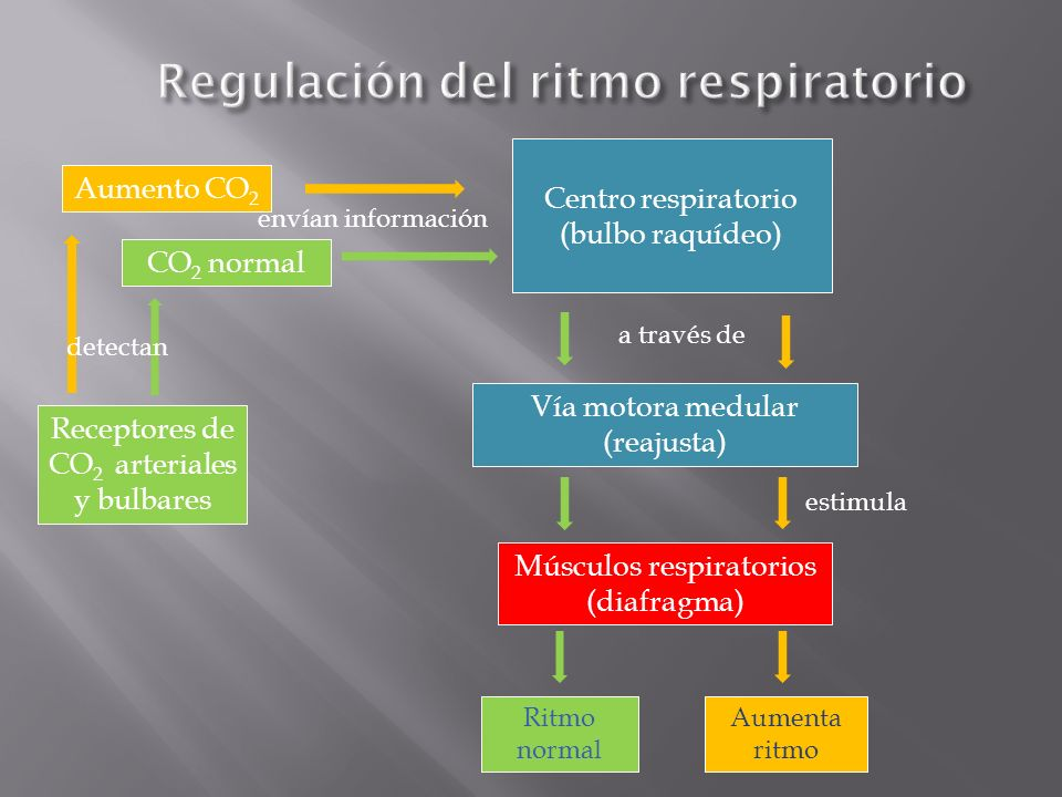 Regulación del ritmo respiratorio