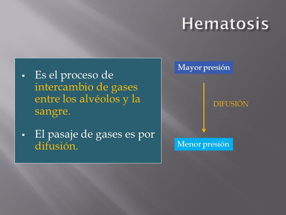 Hematosis Es el proceso de intercambio de gases entre los alvéolos y la sangre. El pasaje de gases es por difusión.