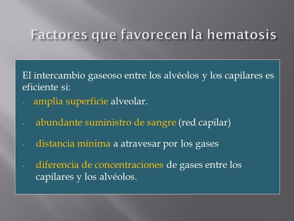 Factores que favorecen la hematosis