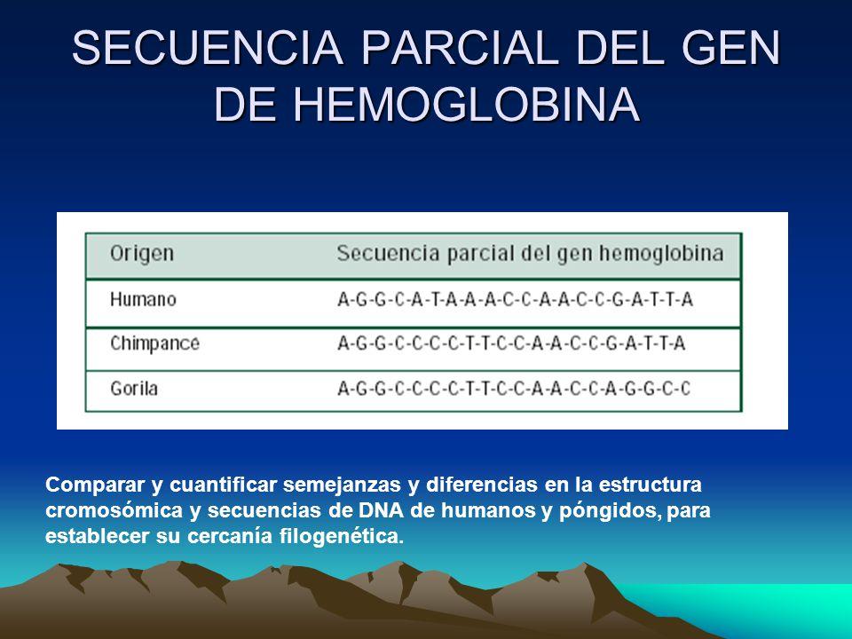 SECUENCIA PARCIAL DEL GEN DE HEMOGLOBINA