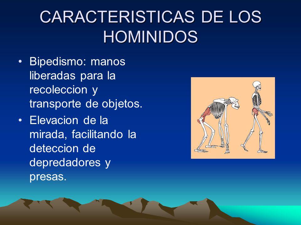 CARACTERISTICAS DE LOS HOMINIDOS