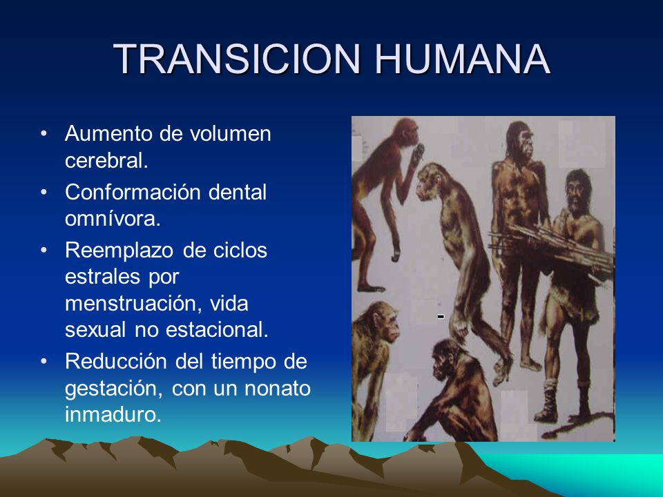 TRANSICION HUMANA Aumento de volumen cerebral.