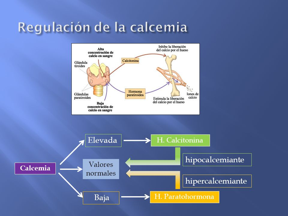 Regulación de la calcemia