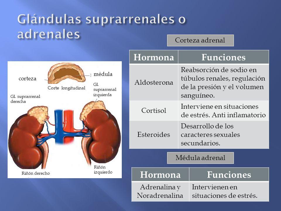 Glándulas suprarrenales o adrenales