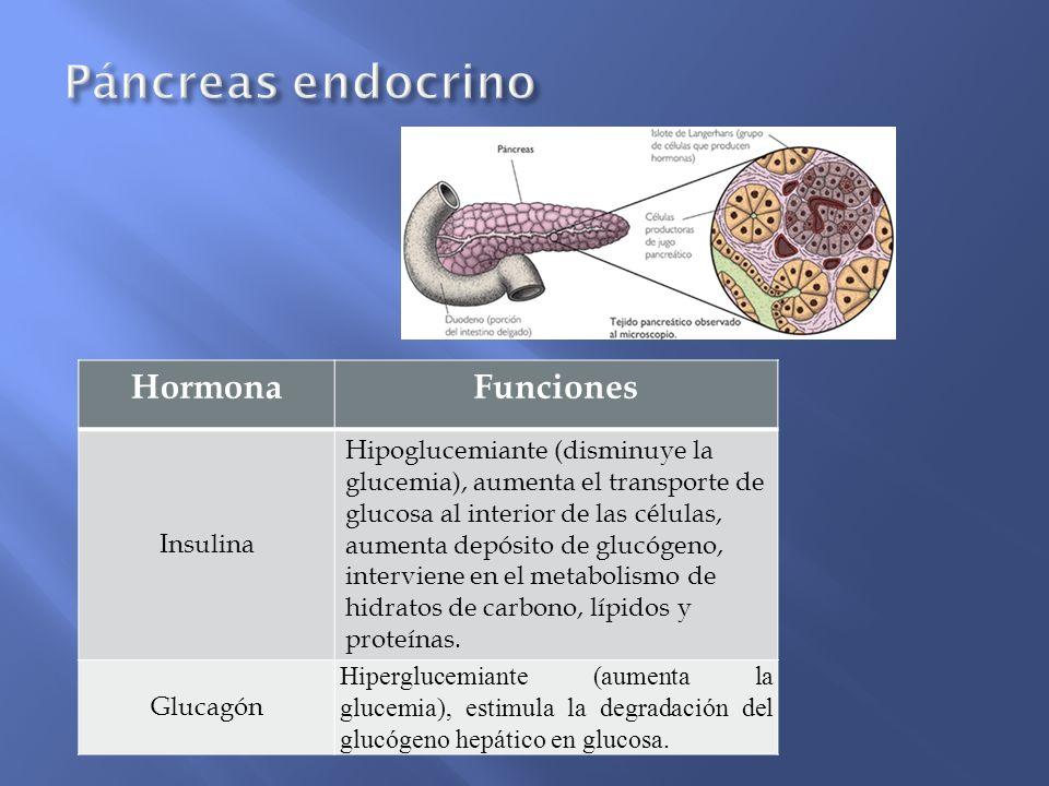 Páncreas endocrino Hormona Funciones Insulina