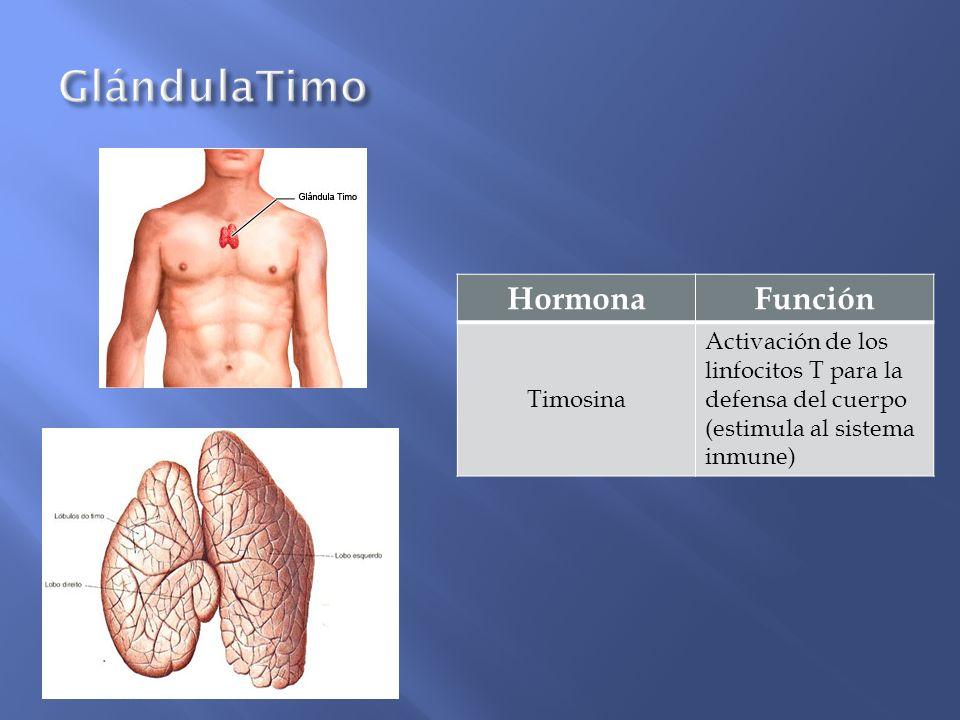 GlándulaTimo Hormona Función Timosina