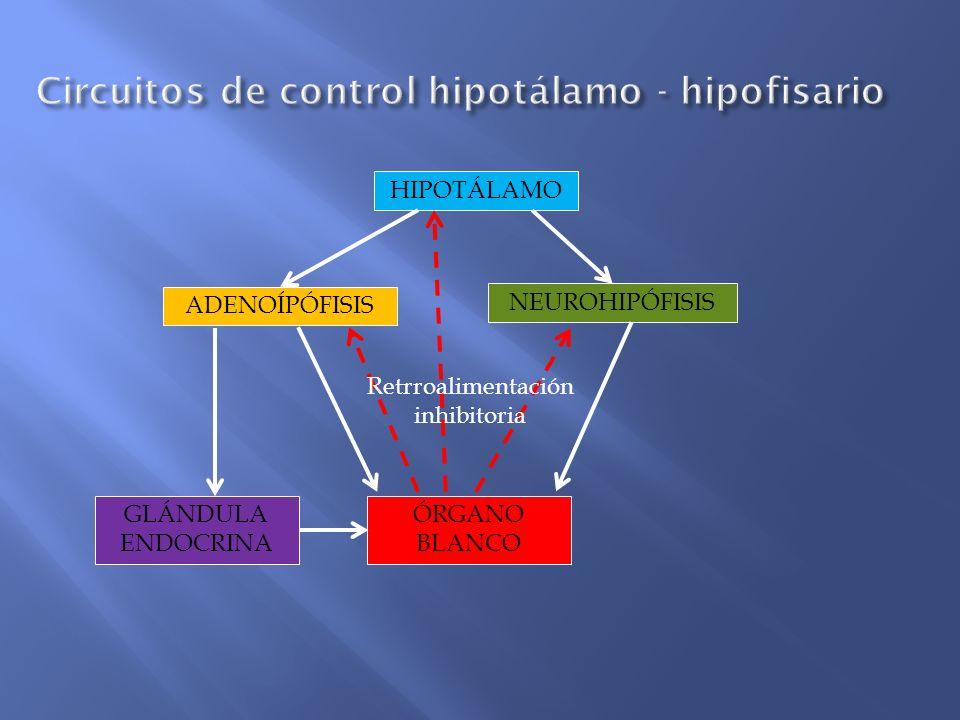 Circuitos de control hipotálamo - hipofisario