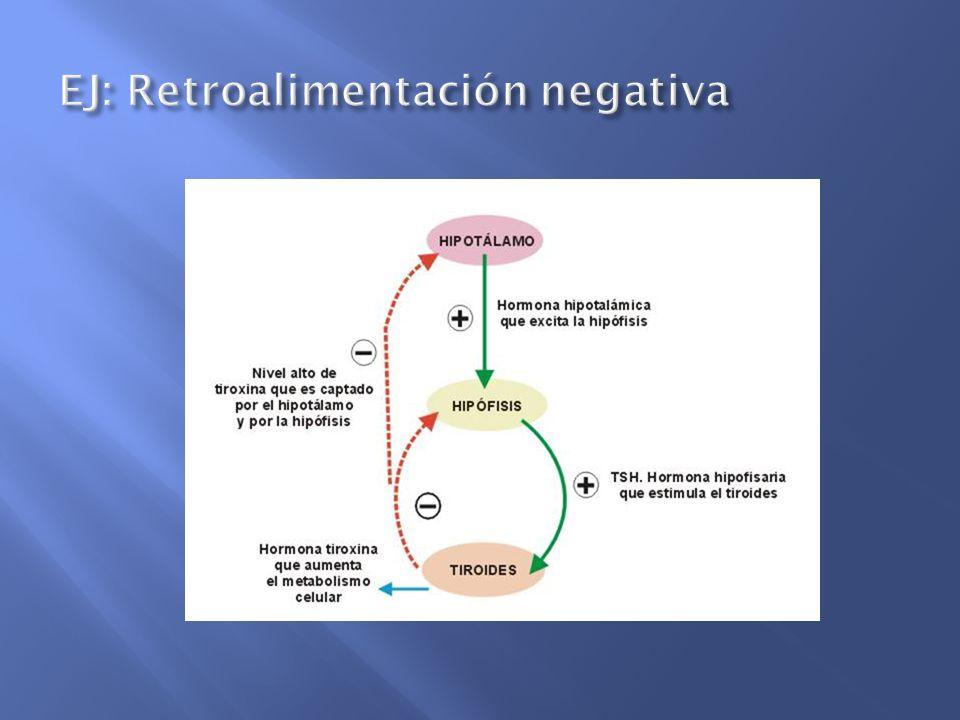 EJ: Retroalimentación negativa